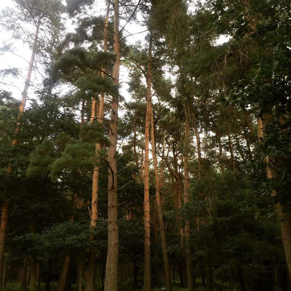 Forest Holidays Thorpe Forest
