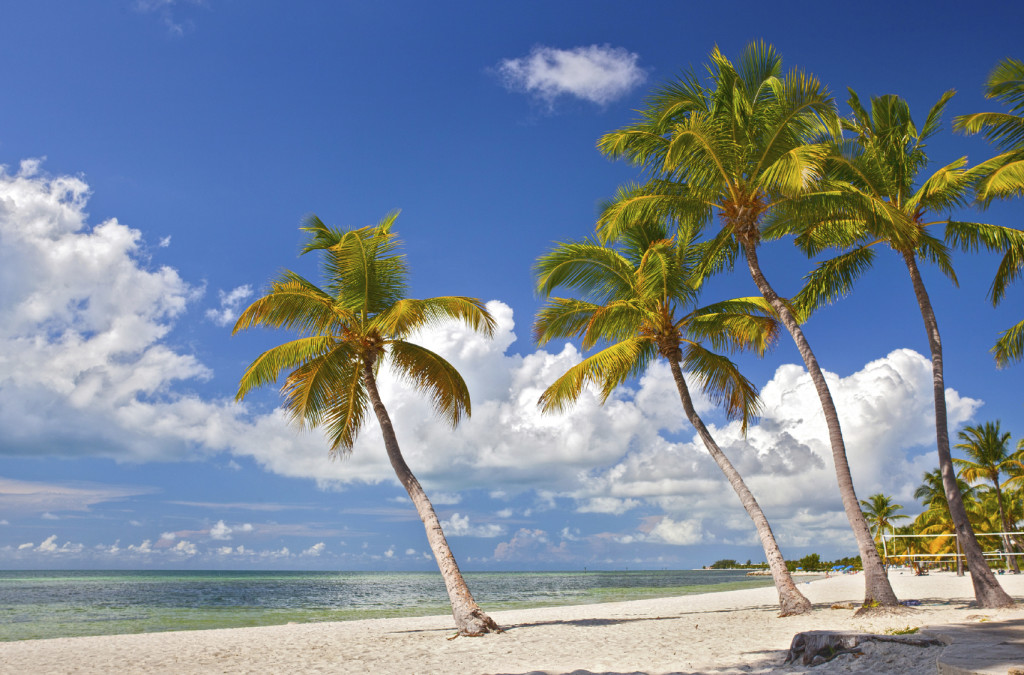 Tropical summer paradise in Miami Beach Florida with Palm trees and ocean background