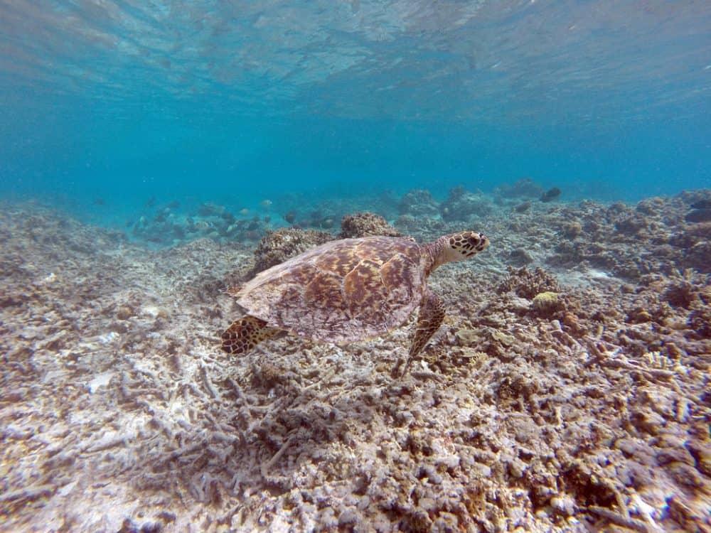 Gili Islands Accommodation
