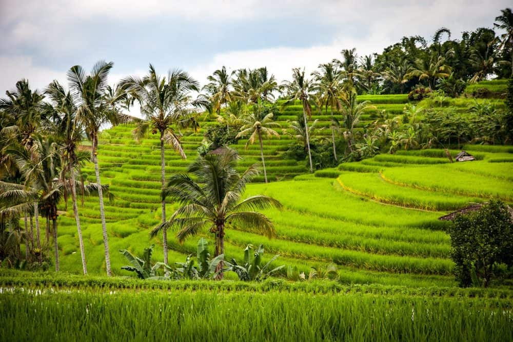 things to do in Bali rice terraces