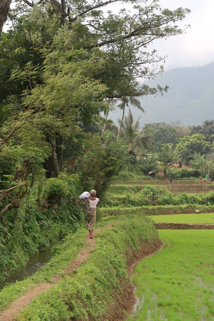 Riverston Matale rice paddies
