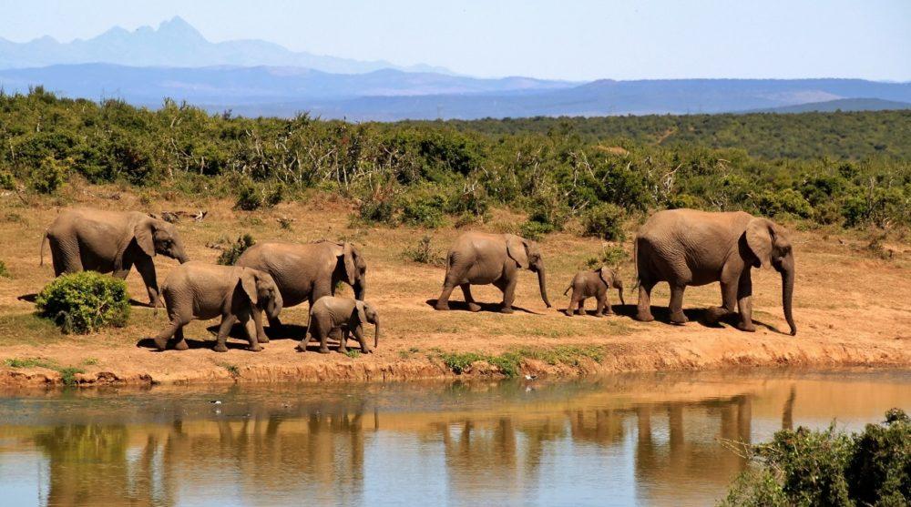 elephants south africa