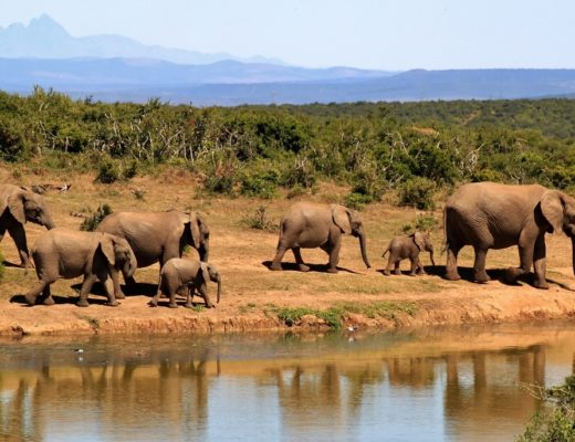 elephants south africa
